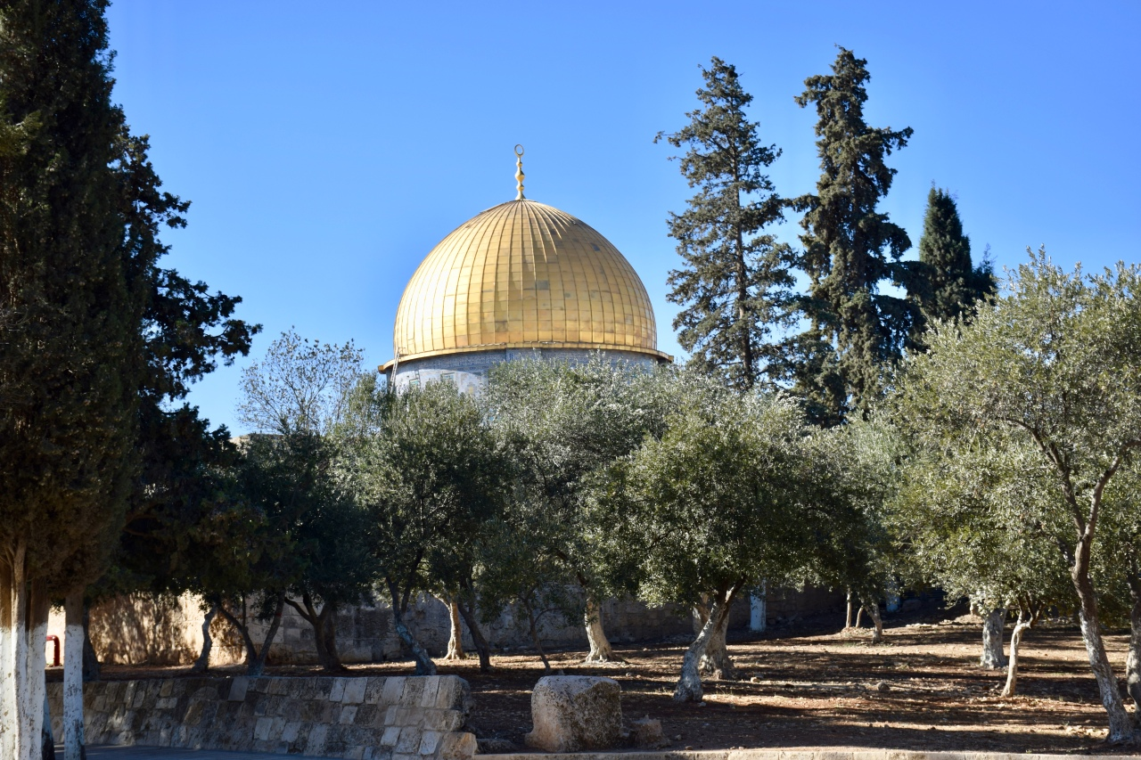 Olive Trees on Temple Mount